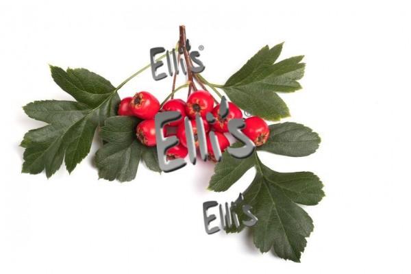 Weißdorn - Ellis Lebensmittelaroma